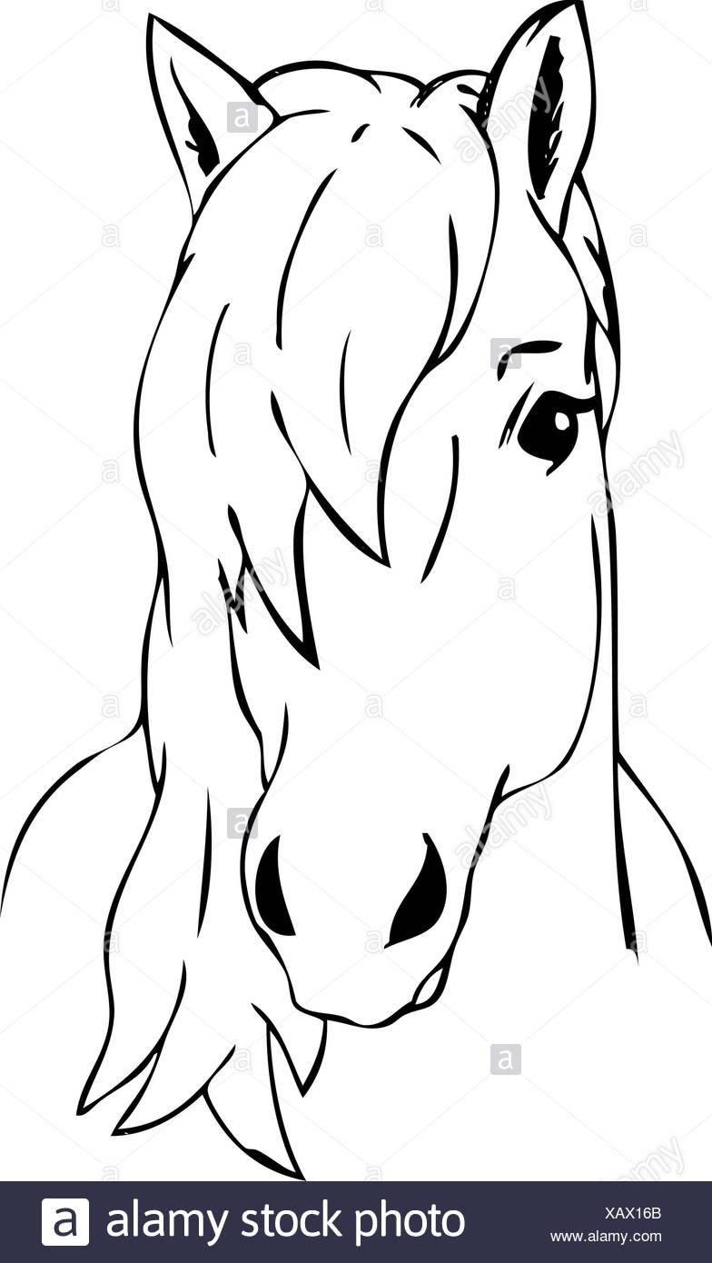 Colour Illustration Paint Draw Cartoon Art Isolated Horse Wild Face Portrait Stock Photo Alamy