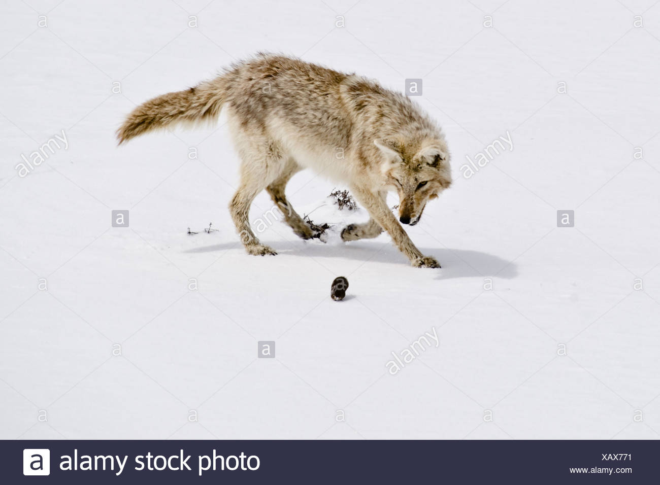 Hunter and the Hunted - Stock Image