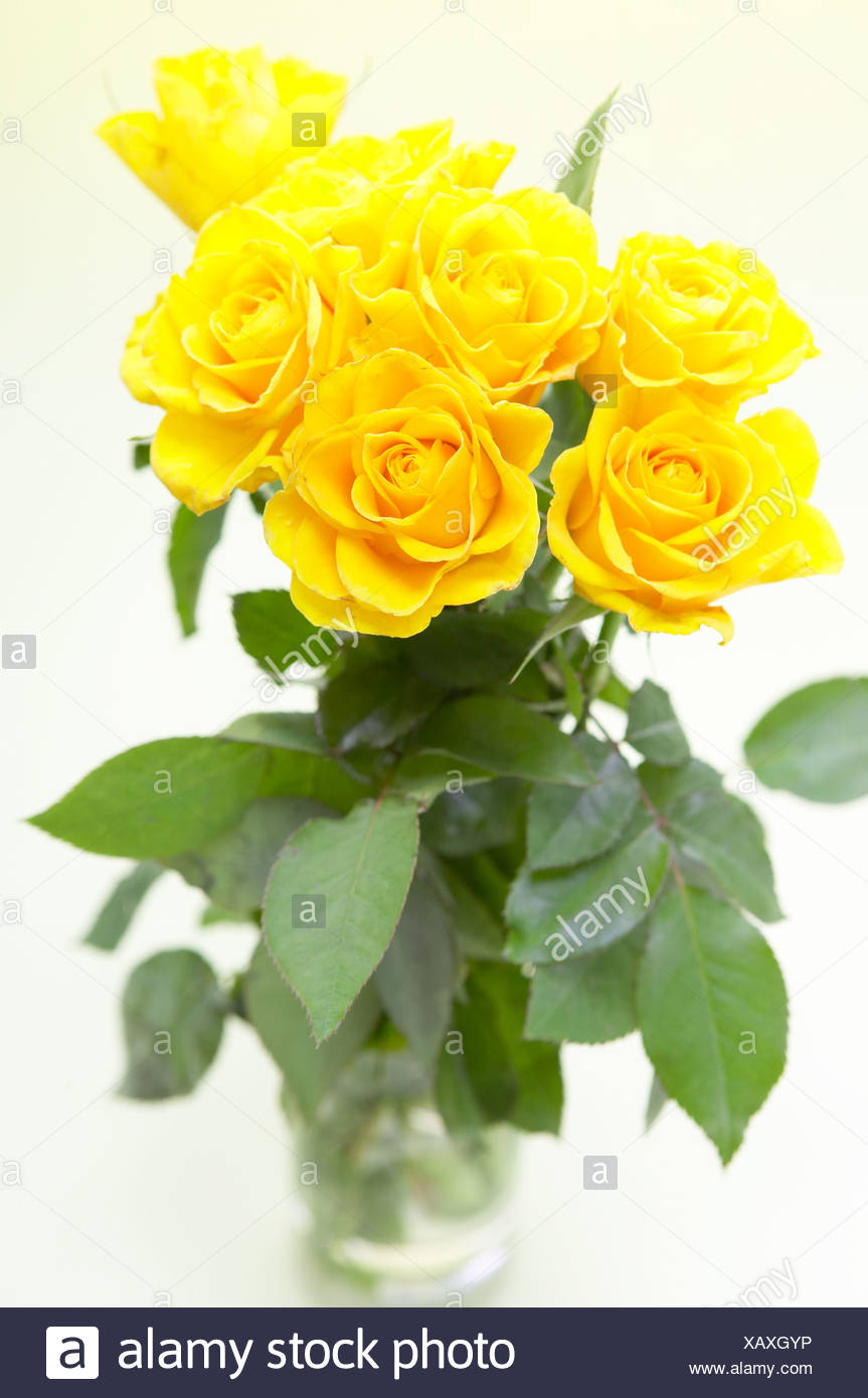 A Bunch Of Yellow Roses In Glass Vase Stock Photo 282096522 Alamy
