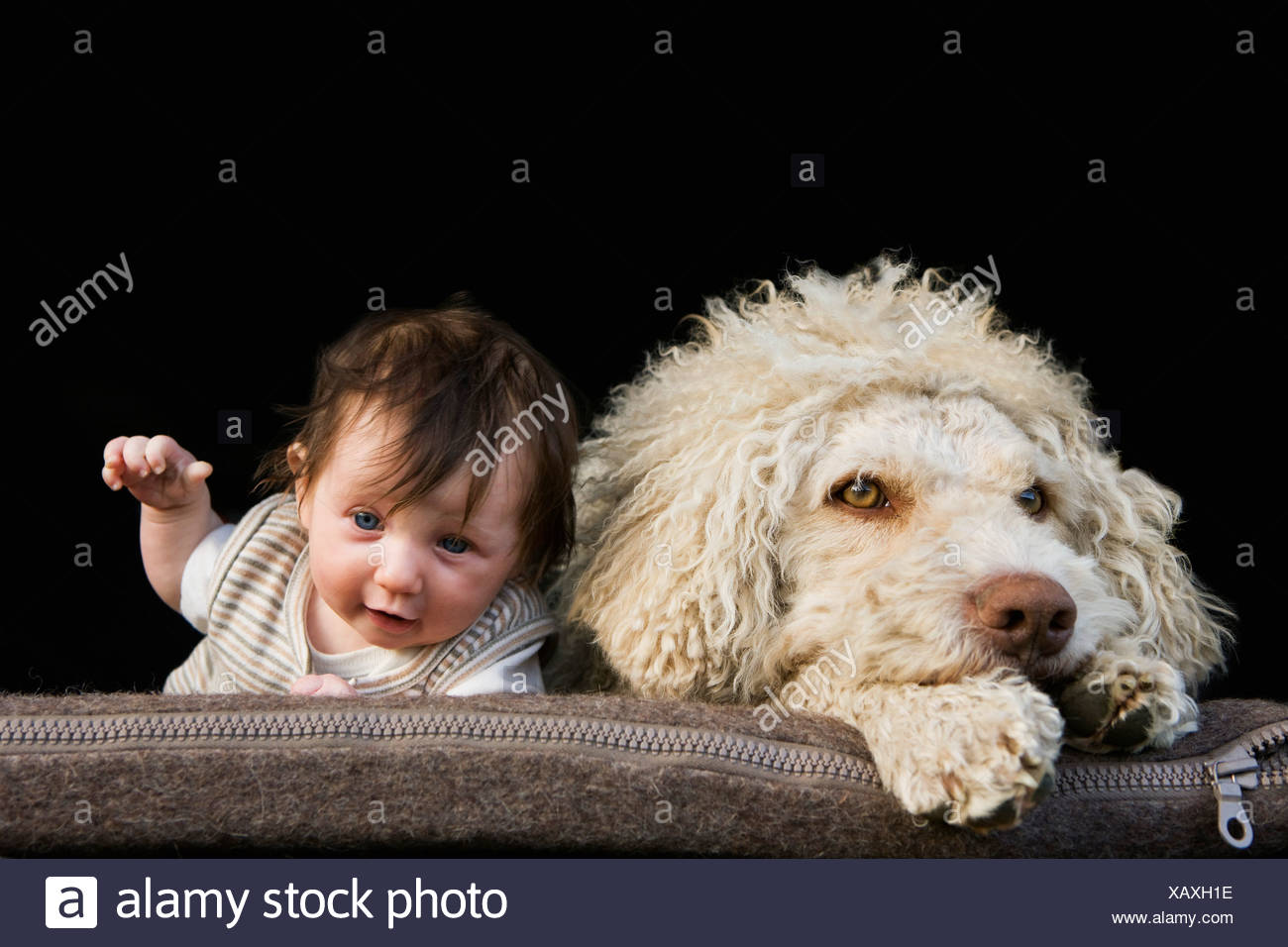 A dog and baby lying on their stomachs side by side - Stock Image