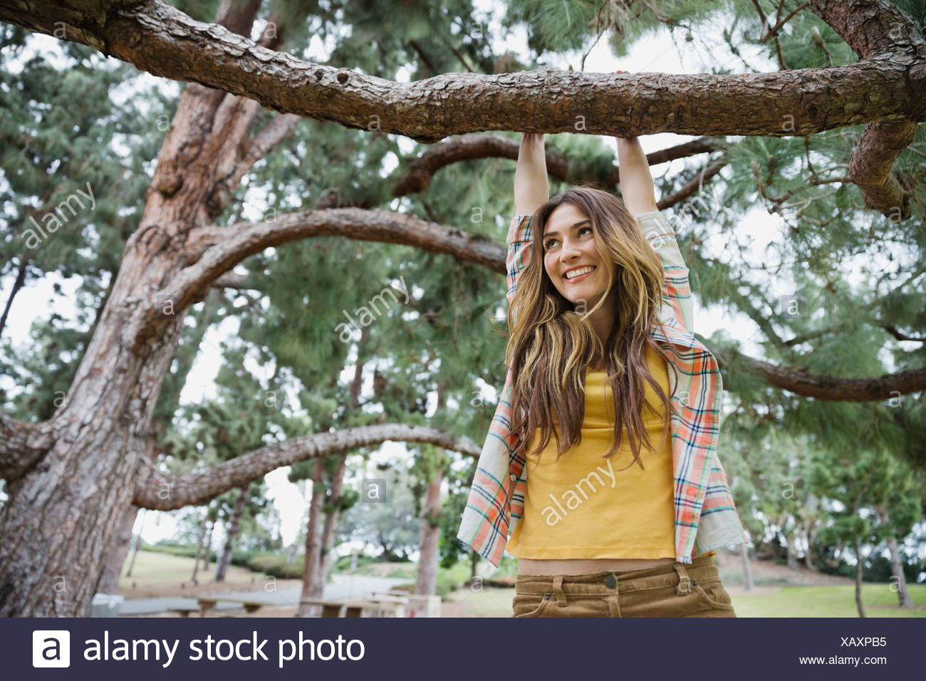 Happy young woman looking up while hanging on tree branch in park - Stock Image