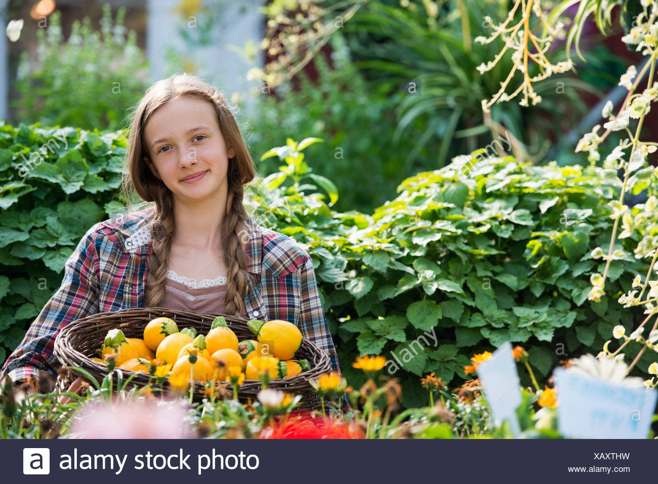 Summer on an organic farm. A girl holding a basket of fresh squash vegetables. - Stock Image