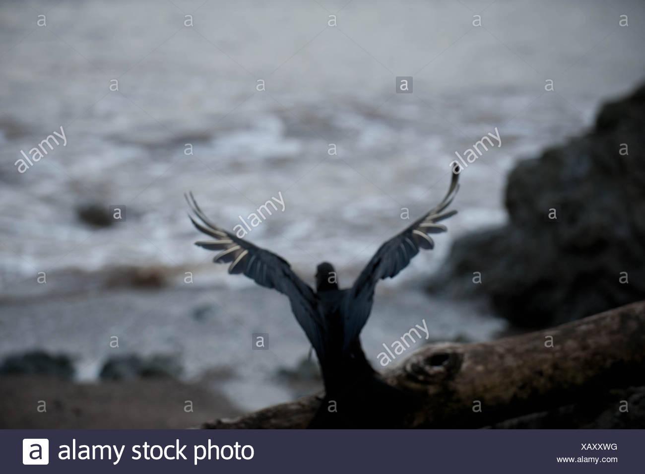 Bird Preparing To Fly Away - Stock Image