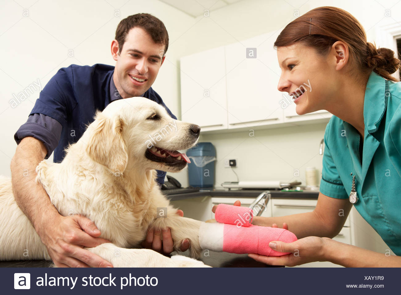 Male Veterinary Surgeon Treating Dog In Surgery - Stock Image