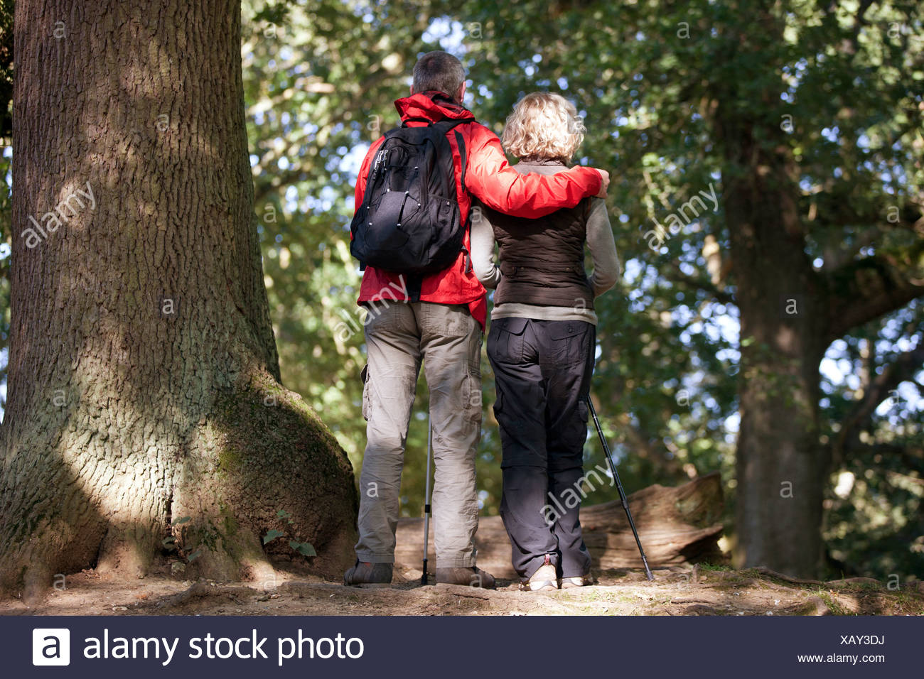 A mature couple standing in woodland looking at their surroundings, rear view - Stock Image