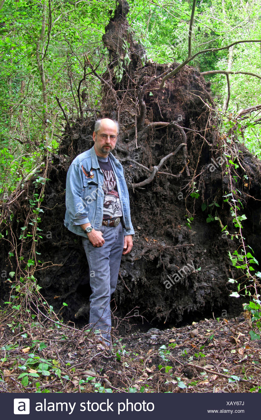 man standing in front of root system of a disrooted birch, storm front Ela at 2014-06-09, Germany, North Rhine-Westphalia, Ruhr Area, Essen - Stock Image