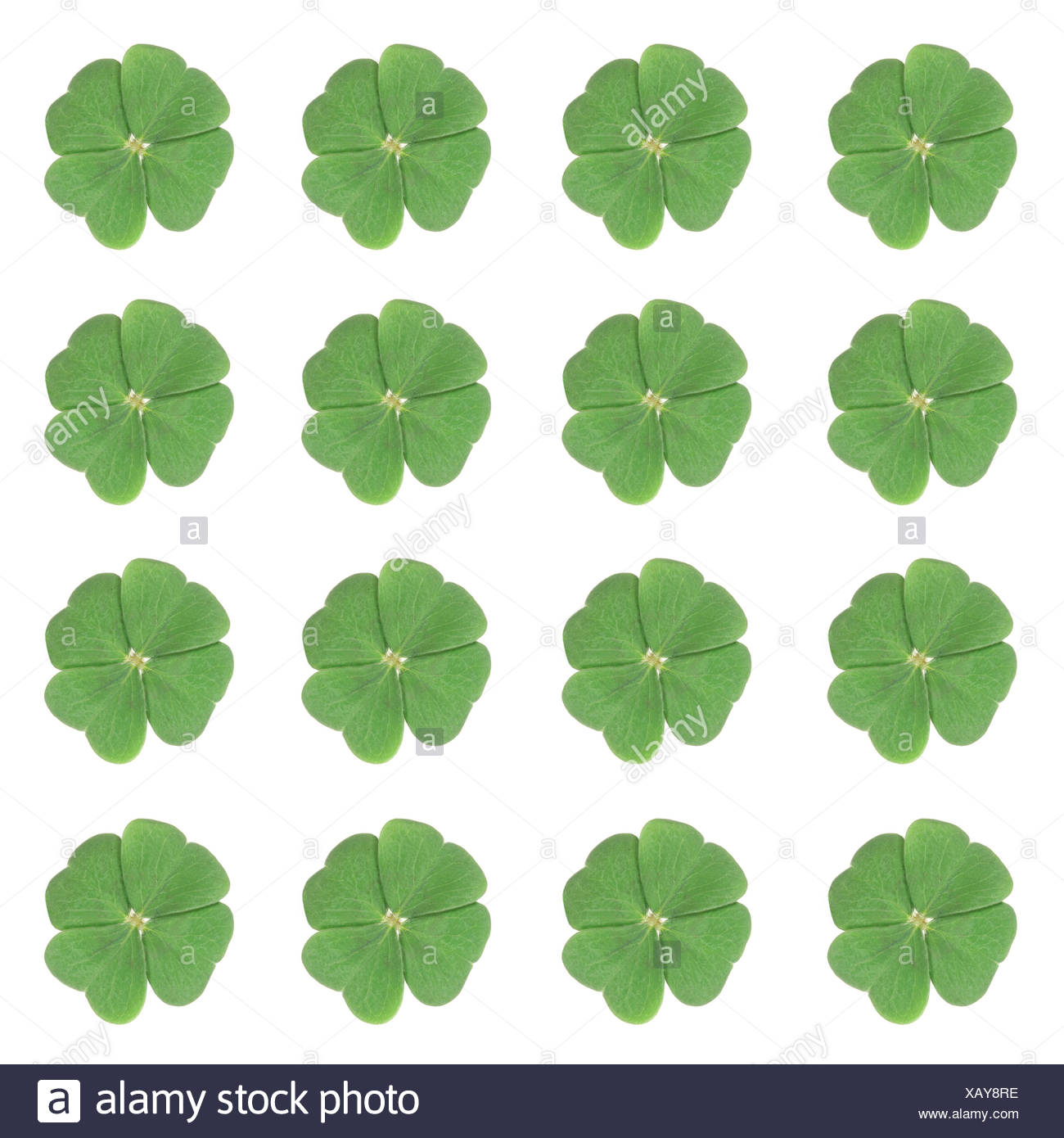 Sixteen four-leaf-clovers arranged symmetrically - Stock Image