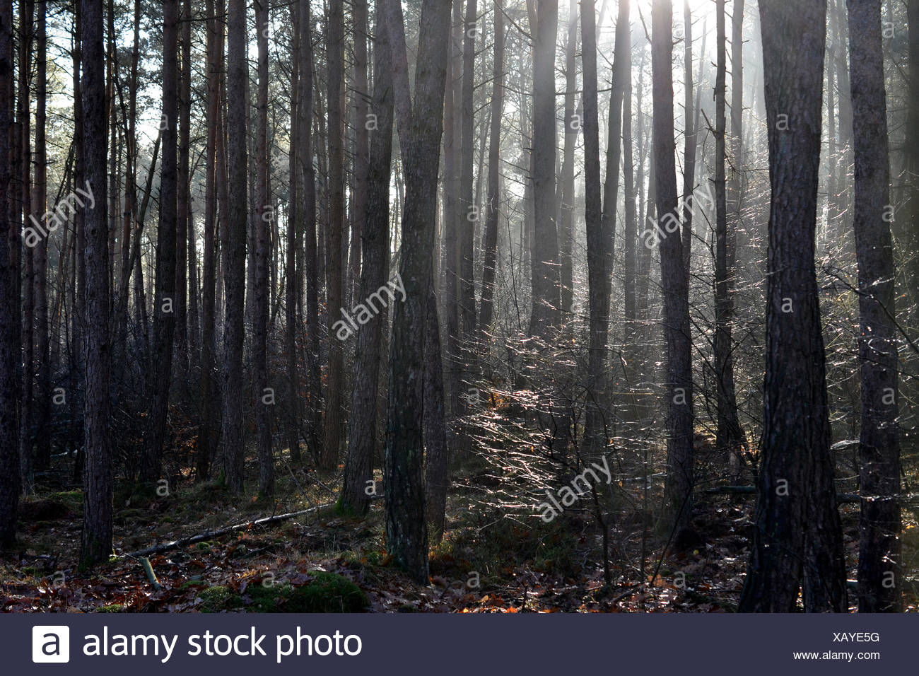 Mysticism with backlight. Stock Photo
