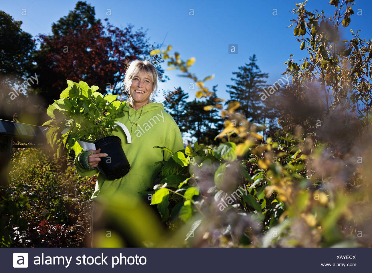 Mid adult woman gardening - Stock Image