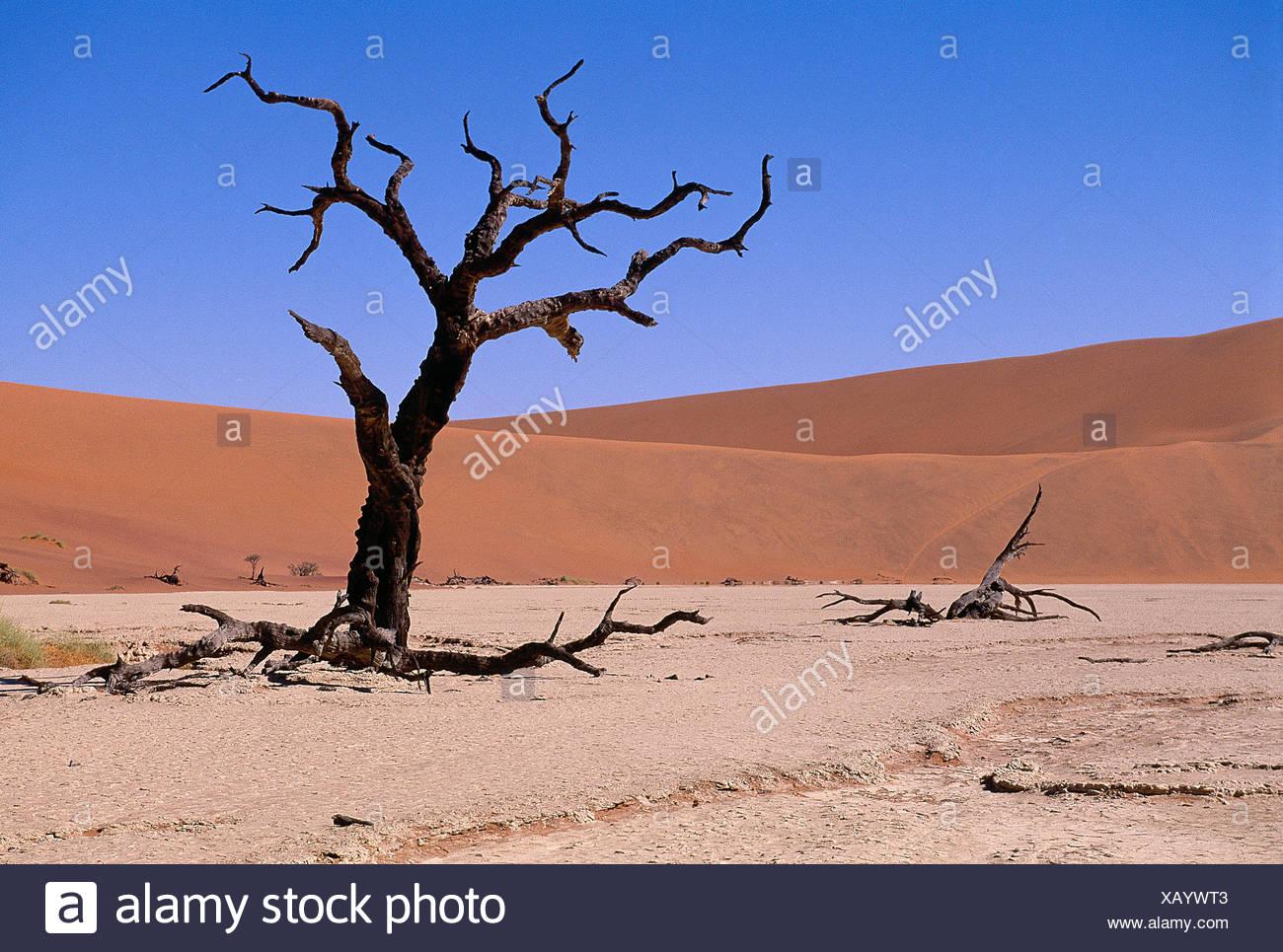 Namibia. Deadvlei desert landscape with dead trees. - Stock Image