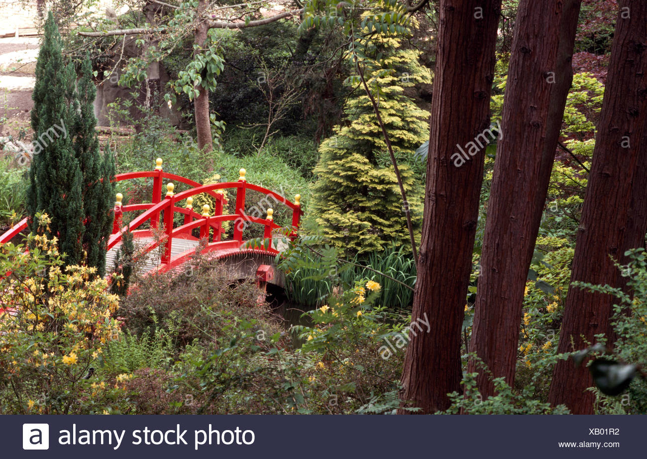Red Chinese style bridge over a small stream with conifers growing on the bank in a large country garden - Stock Image
