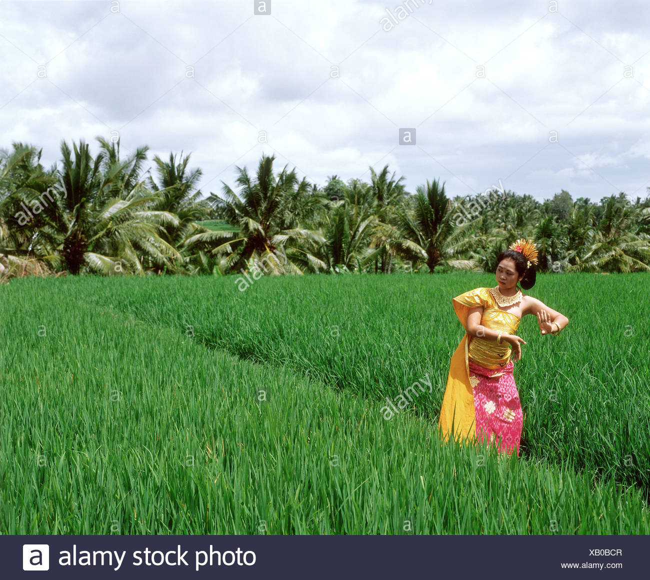 indonesia bali balinese dancer in padi fields trees in background stock photo alamy https www alamy com indonesia bali balinese dancer in padi fields trees in background image282136087 html