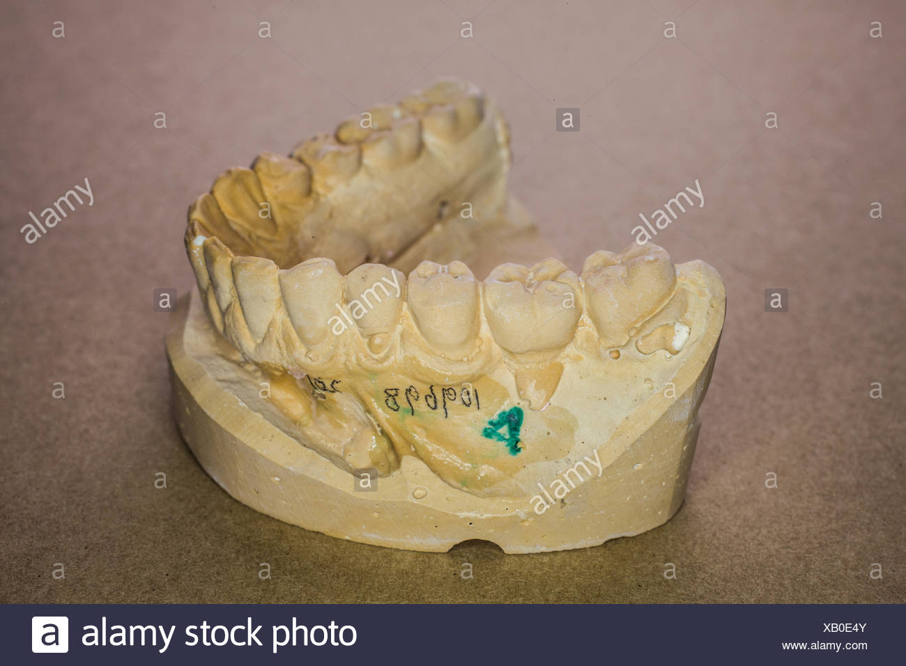 mandibular impression - Stock Image