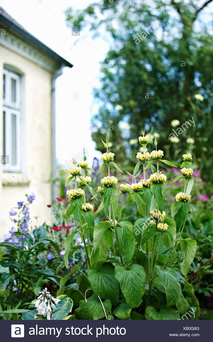Flowers growing in garden - Stock Image