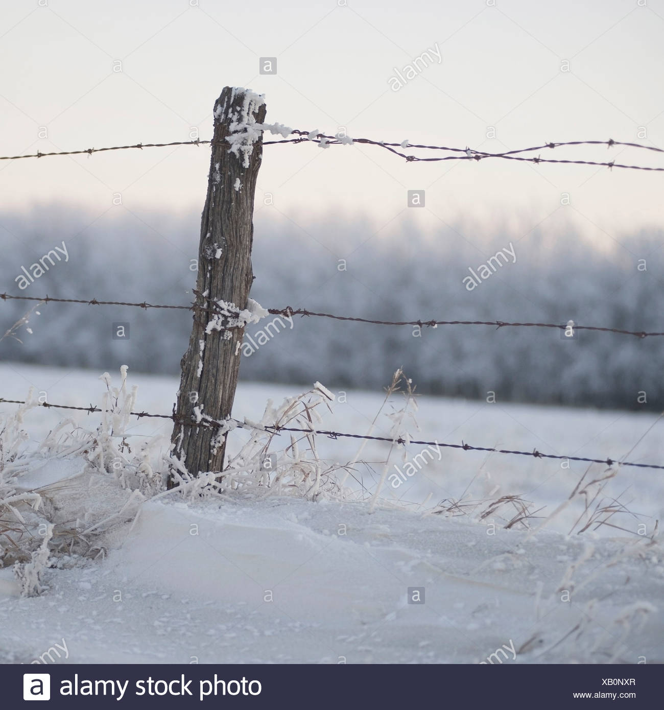 Winnipeg, Manitoba, Canada; A Barbed Wire Fence In The Snow In Winter - Stock Image