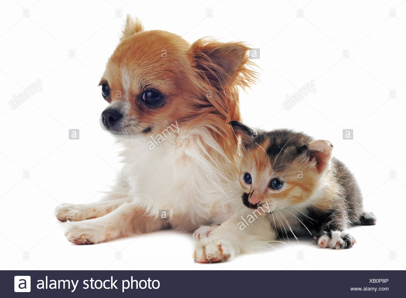 Friendship Cats Dog Puppy Cat Baby Kitten Pussycat Cat Domestic Cat Stock Photo Alamy