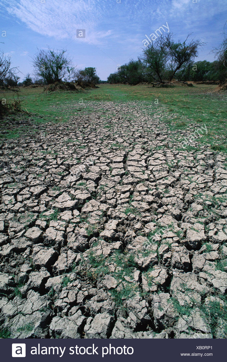 Cracked earth during severe drought in Keolado Ghana NP Rajasthan India - Stock Image
