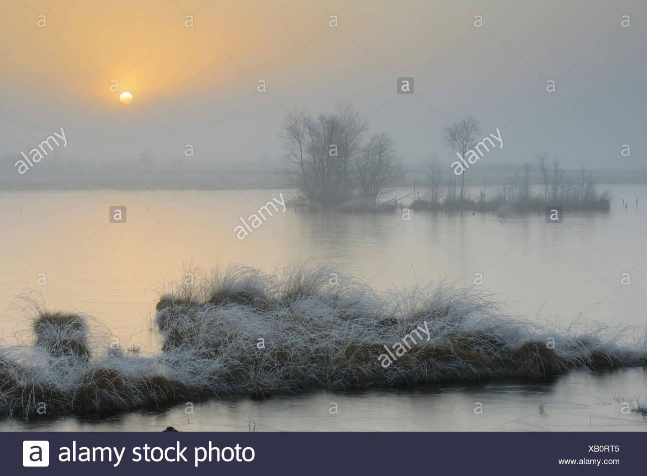 goldenstedter moor in winter, niedersachsen, lower saxony, germany - Stock Image
