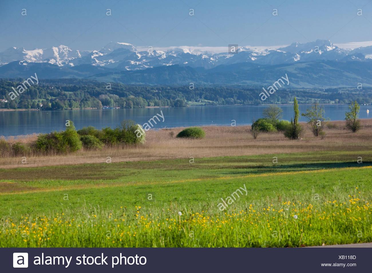 Switzerland, Europe, lake, ship, boat, ships, boats, Alps, canton, ZH, Zurich, spring, Greifensee, Lake Greifen, meadow, - Stock Image