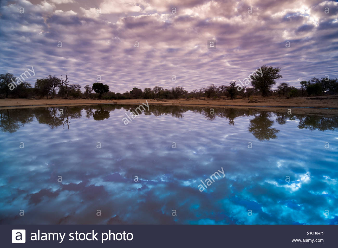 Water hole, Kruger National Park, Limpopo, South Africa, Africa - Stock Image