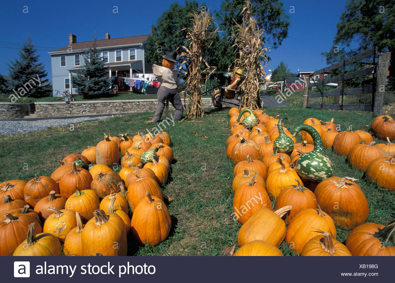 New Holland Amish Country Dutch Country Pennsylvania USA United States America pumpkins pumpkin vegetables d - Stock Image