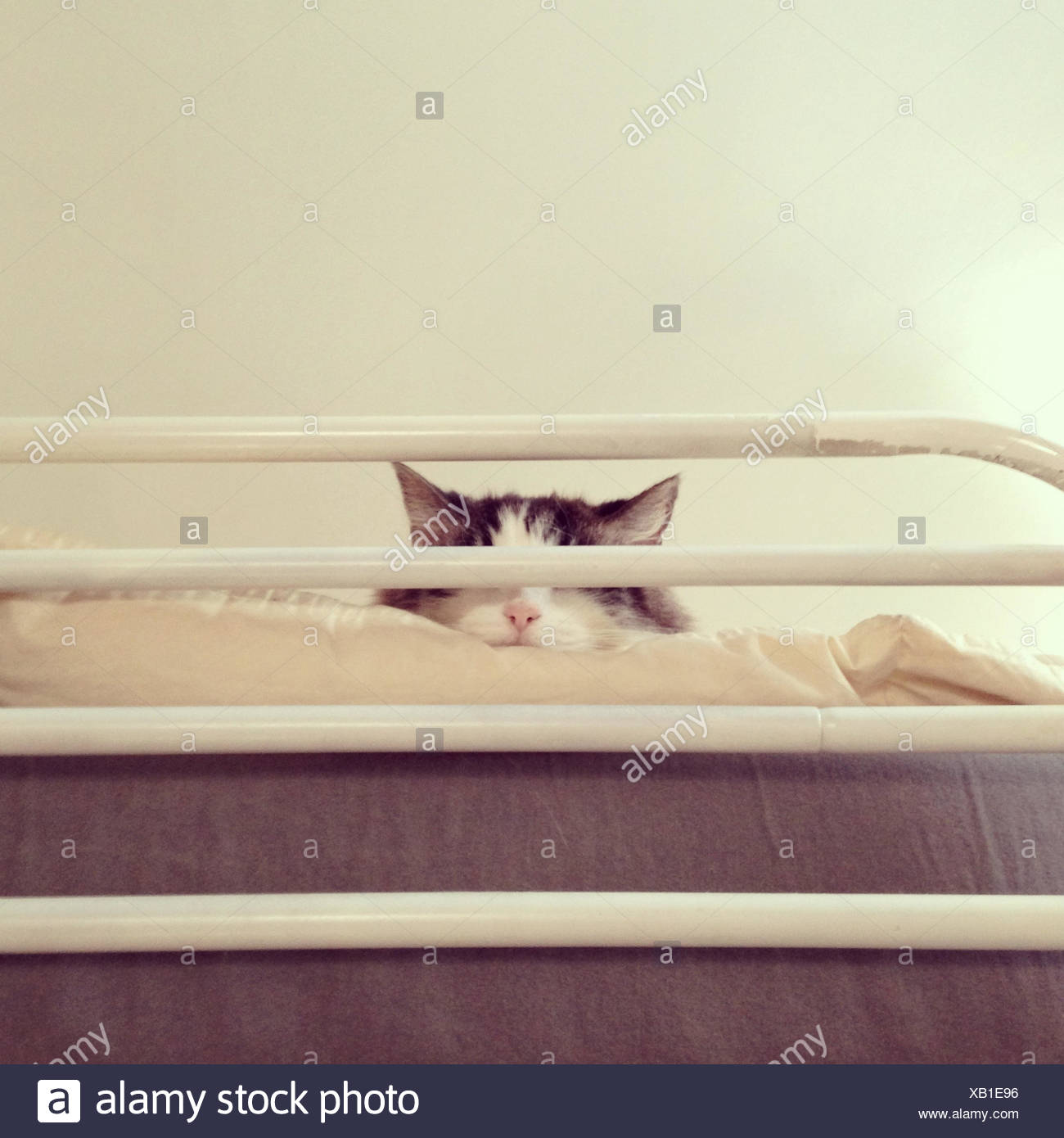 Cat sleeping on loft bed - Stock Image