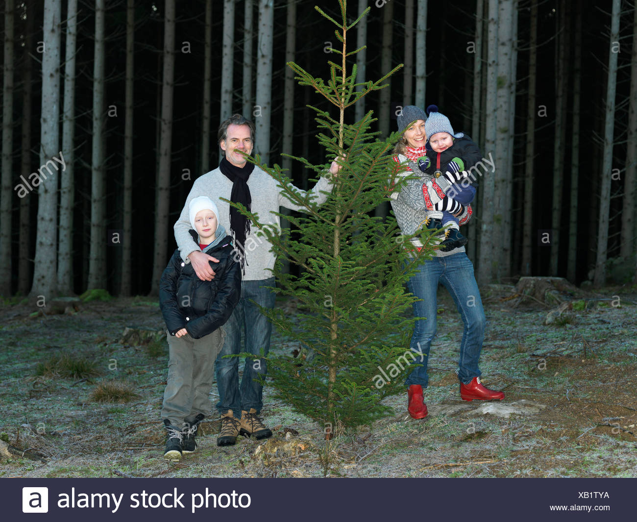 Family with christmas tree - Stock Image
