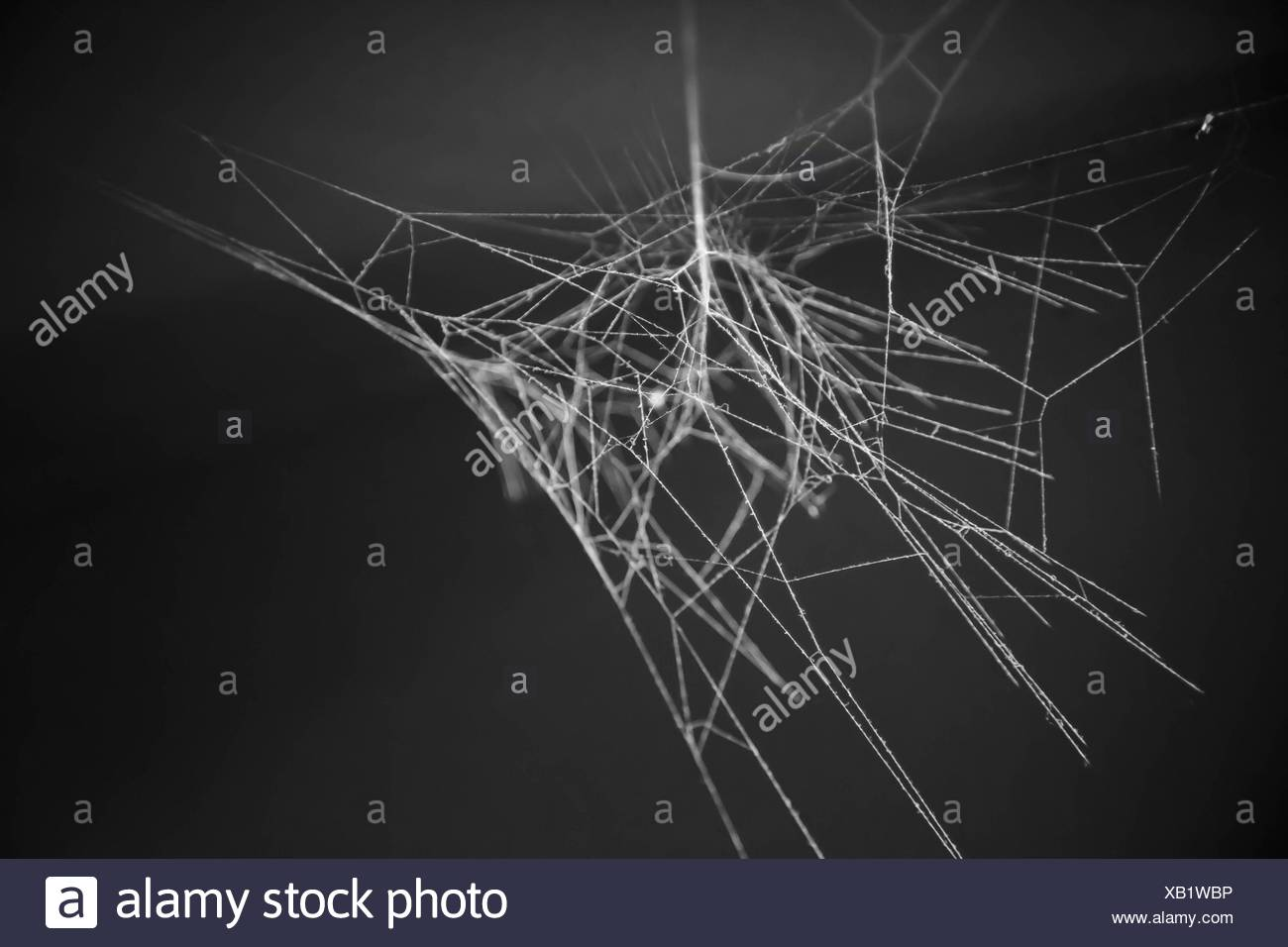 View Of Spider Web At Night - Stock Image