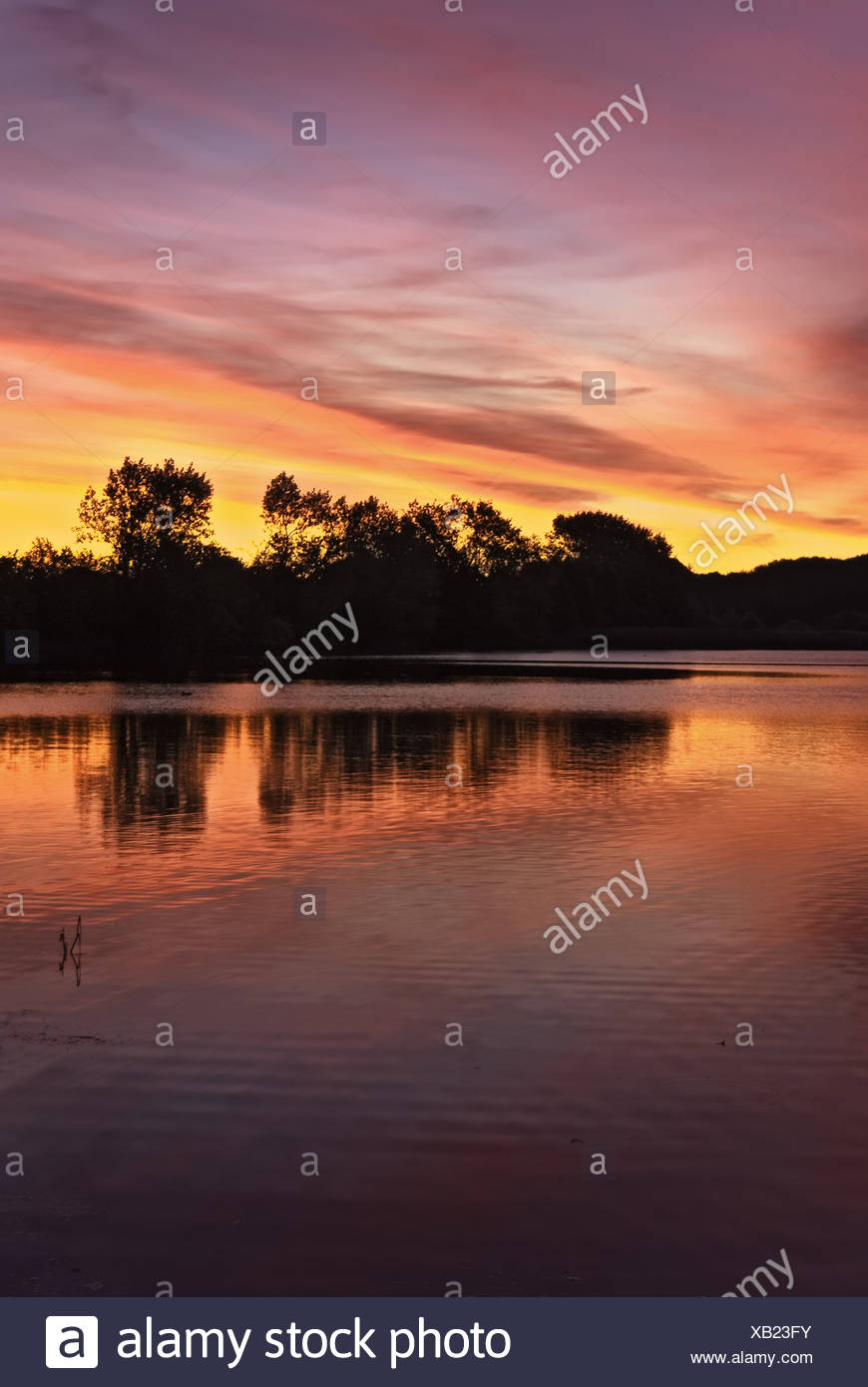 Evening mood at the Haddebyer Noor near Fahrdorf - Stock Image