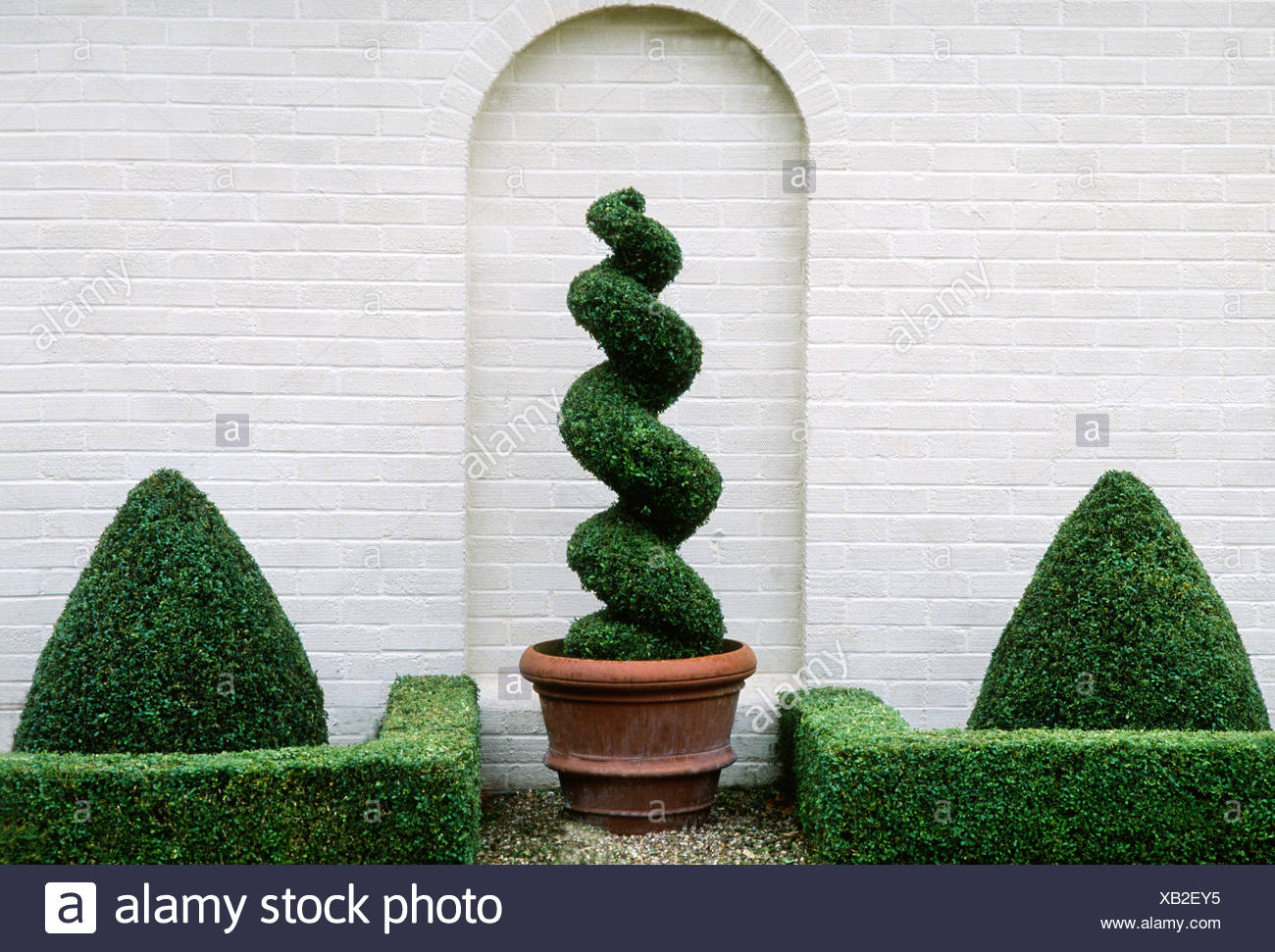 Garden Box Topiary Spiral Design Plants Geometric Wall Arch Clipped Hedges Buxus Hedge Stock Photo Alamy