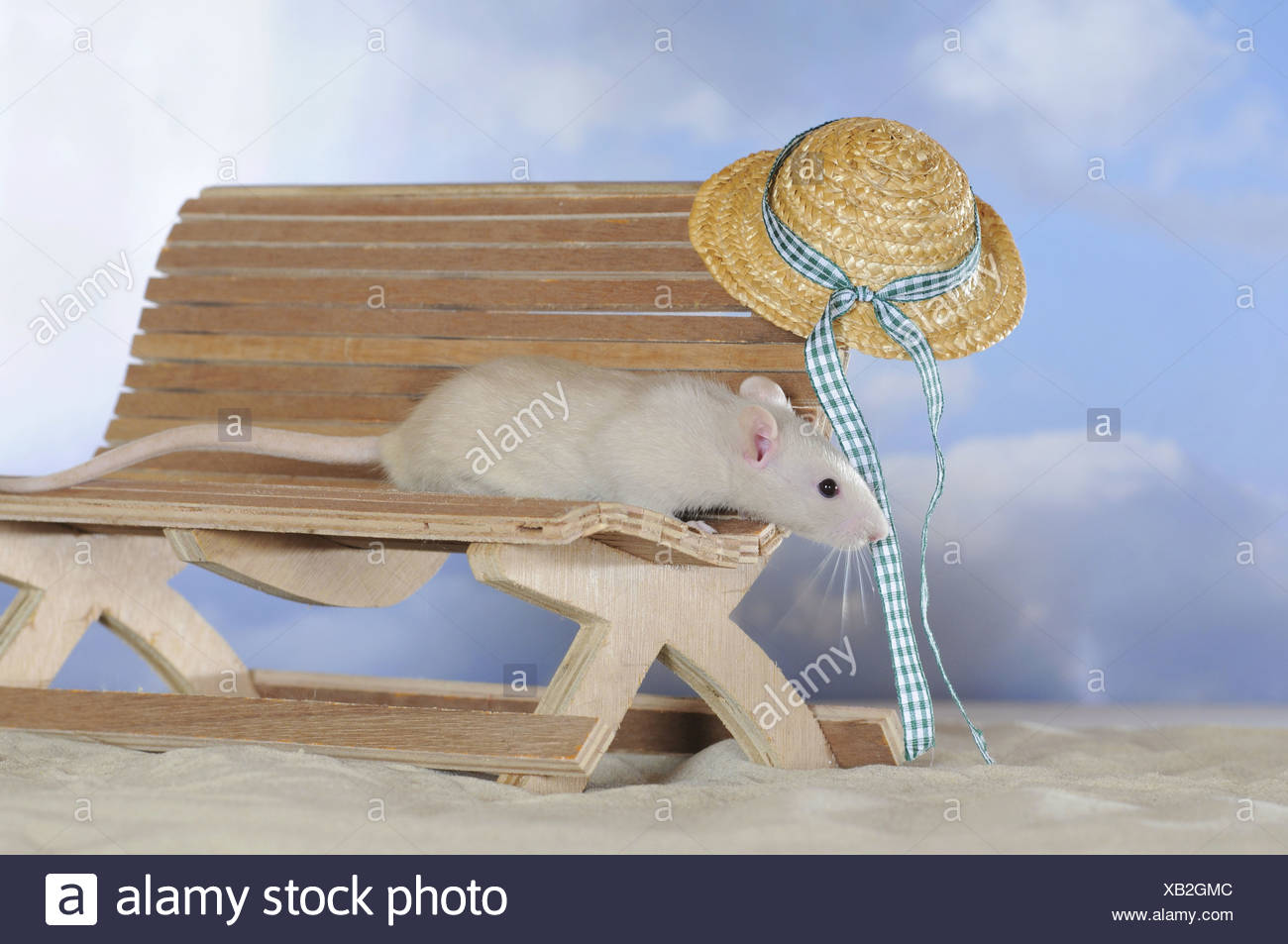Phenomenal Fancy Rat Cream Coloured On A Small Wooden Bench With A Beatyapartments Chair Design Images Beatyapartmentscom
