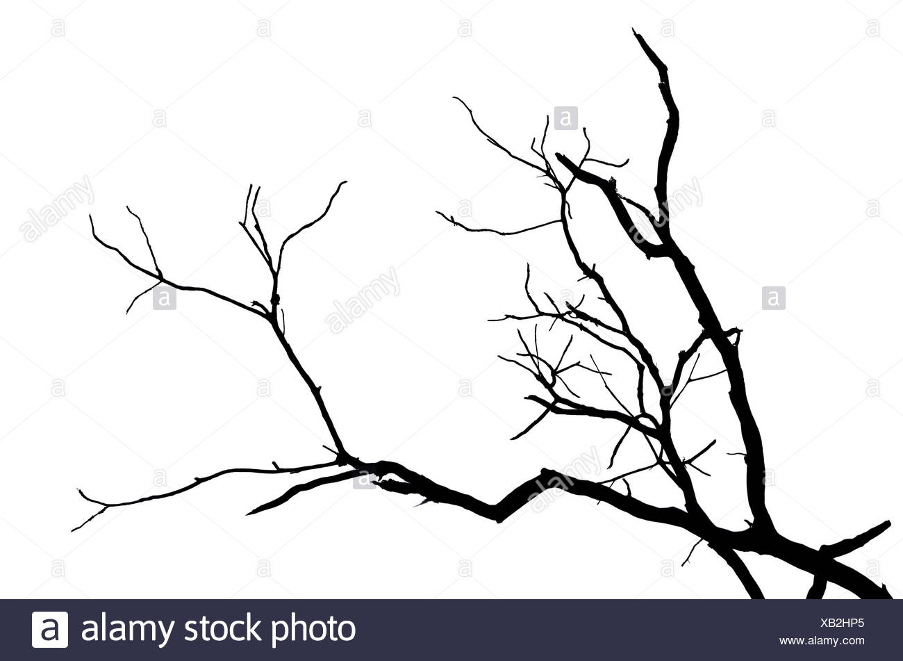 Tree Branch Drawing High Resolution Stock Photography And Images Alamy
