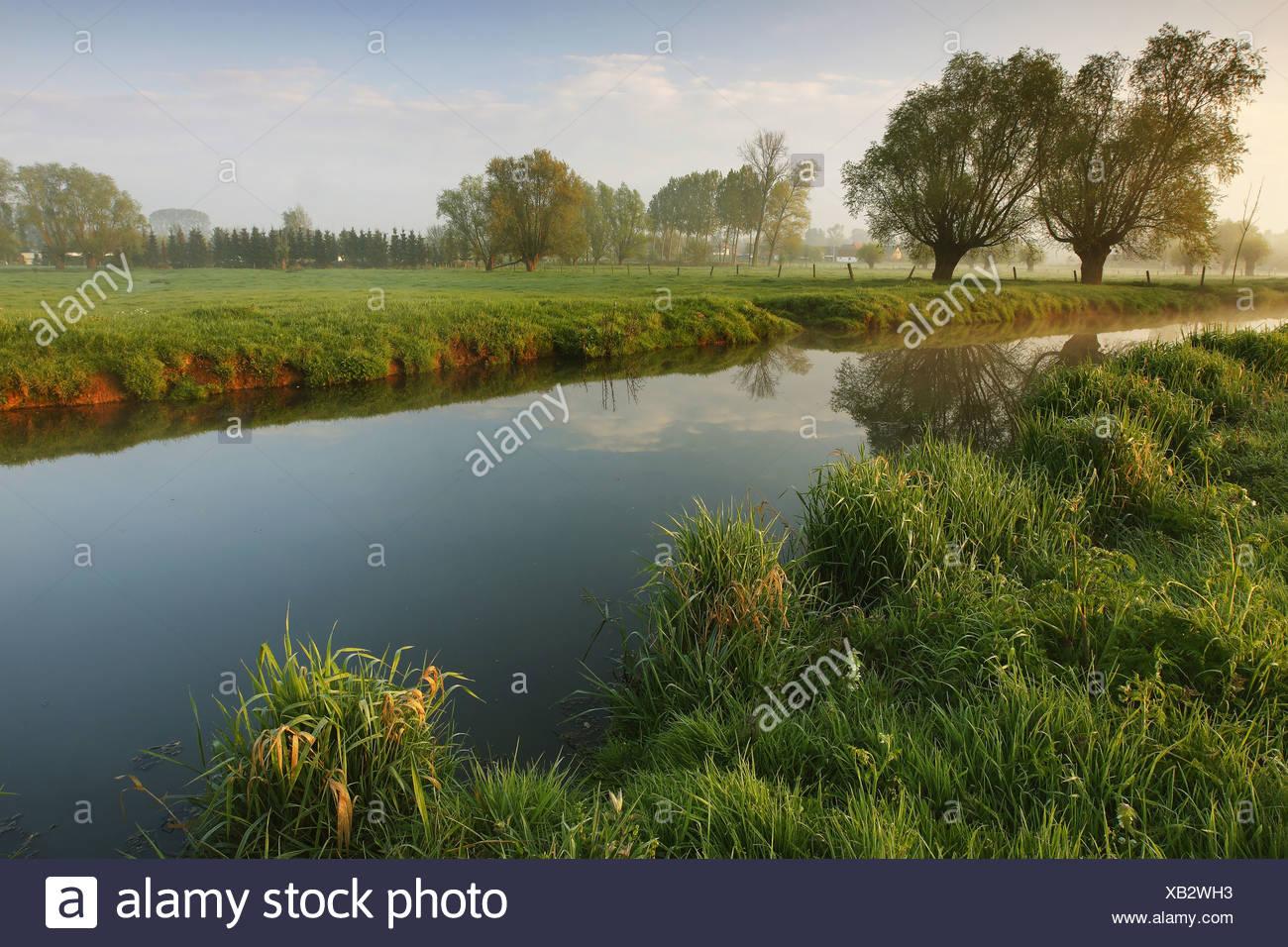 Zwalm river, Belgium, Ardennes - Stock Image