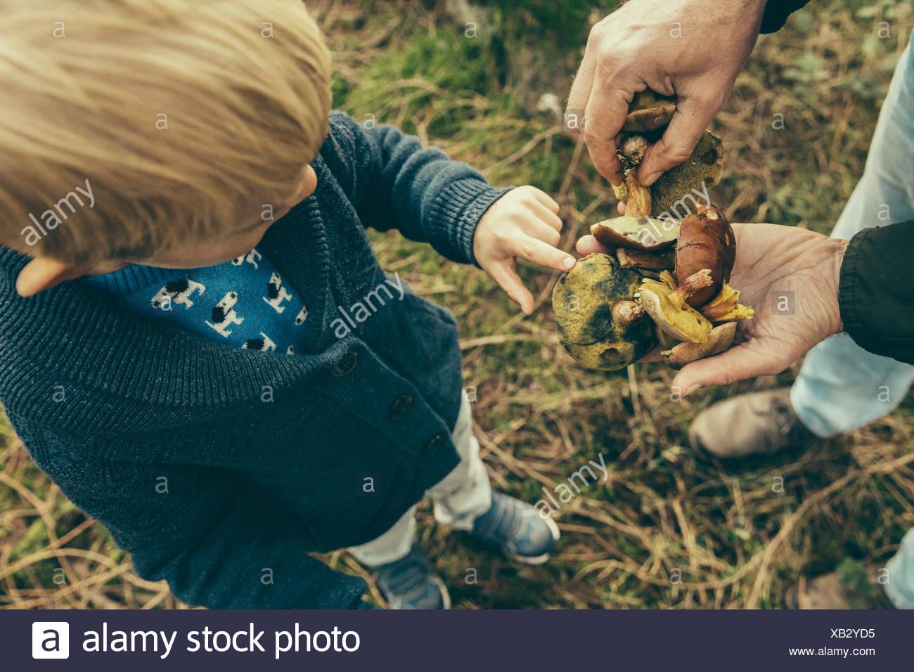 Little boy looking at bay bolete mushrooms in man's hand - Stock Image