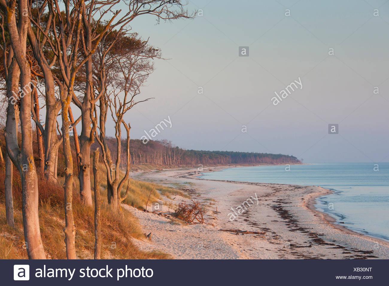 West coast of the Darss. Peninsula of Fischland-Darss-Zingst, Western Pomerania Lagoon Area National Park, Mecklenburg-Western P Stock Photo