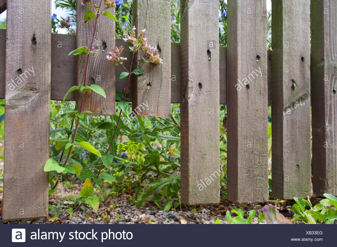 fence with opening to hedgehogs, Germany - Stock Image