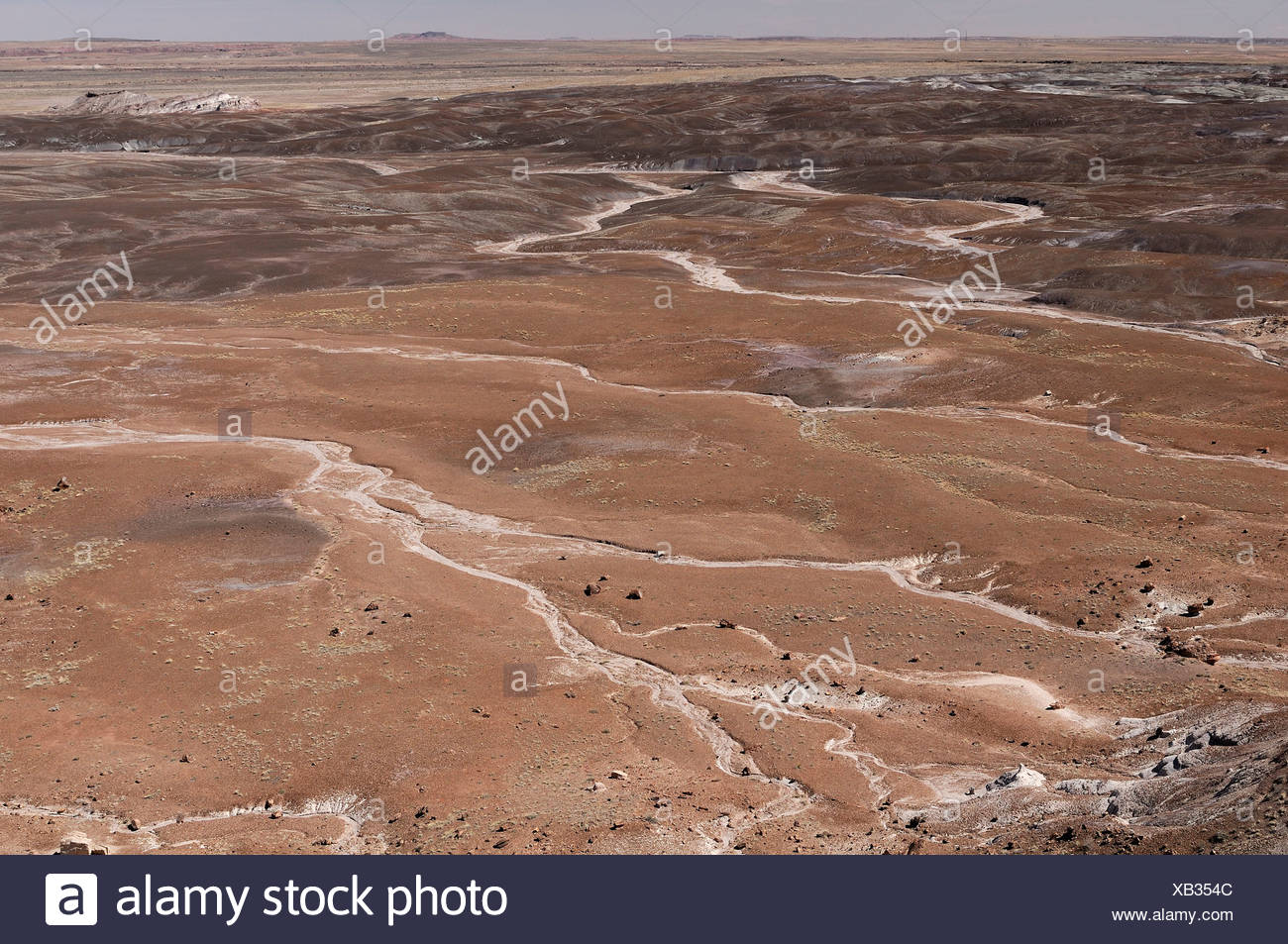Petrified Forest, National Park, Arizona, USA, United States, America, landscape, brown - Stock Image
