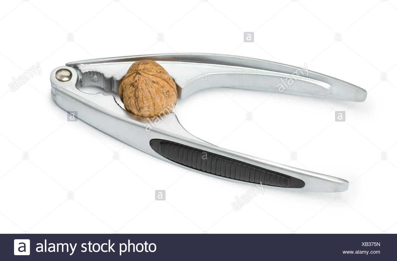 Nutcracker with the nut among jaws - Stock Image