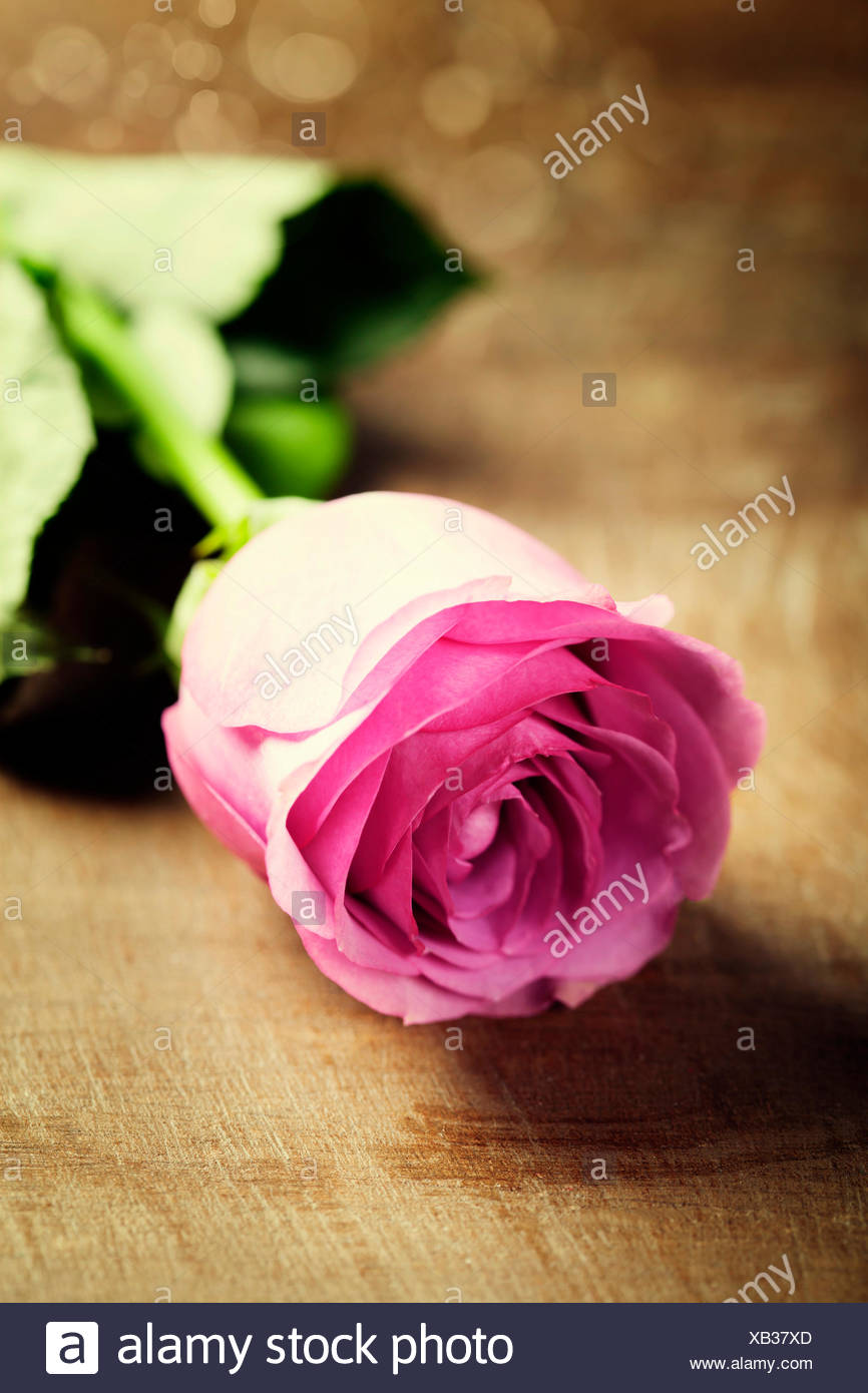 Pink rose on wooden vintage table - Stock Image
