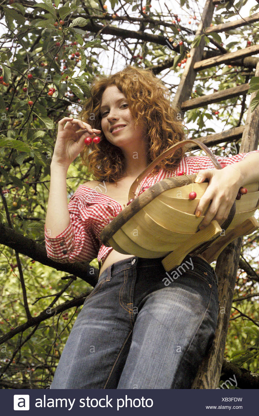 Tree, conductor, woman, young, smile, basket, cherry harvest, redheads, red-haired, curls, happy, smile, harvest, natural, naturalness, bare midriff, joy, fun, yield, rurally, land lives, orchard, summer, cherry tree, cherries, basket, fruit basket, fruit basket, harvest, fruits, ripe, wooden conductor, garden - Stock Image