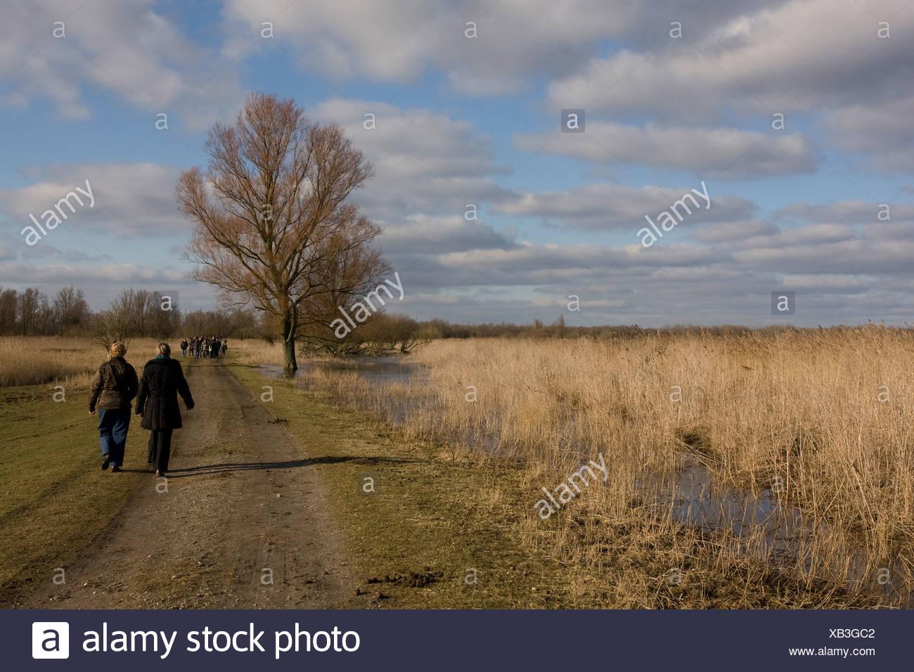 Wandelaars in het natuurgebied Oostvaardersplassen Stock Photo