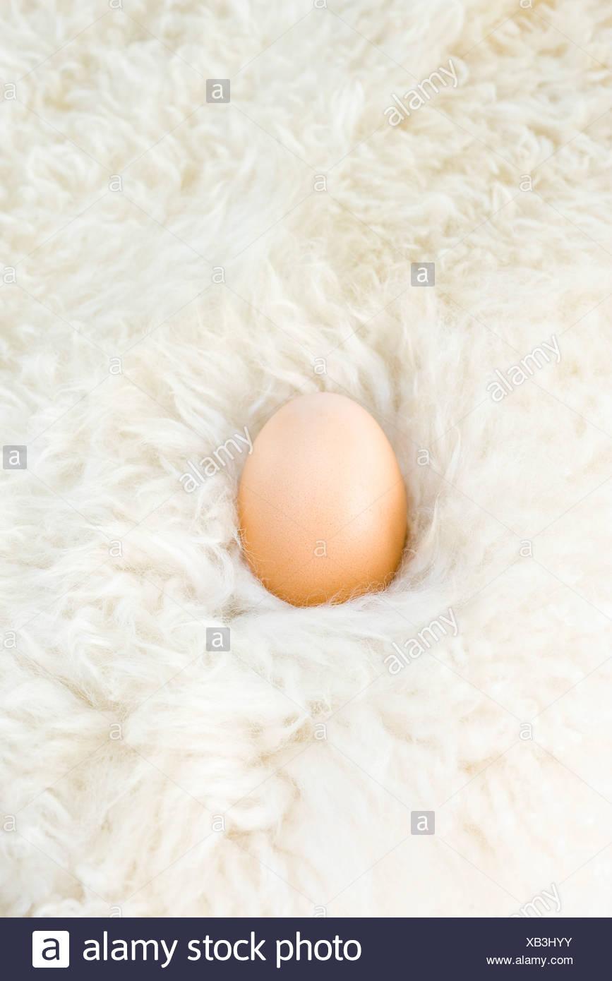 Egg nestled in wool - Stock Image