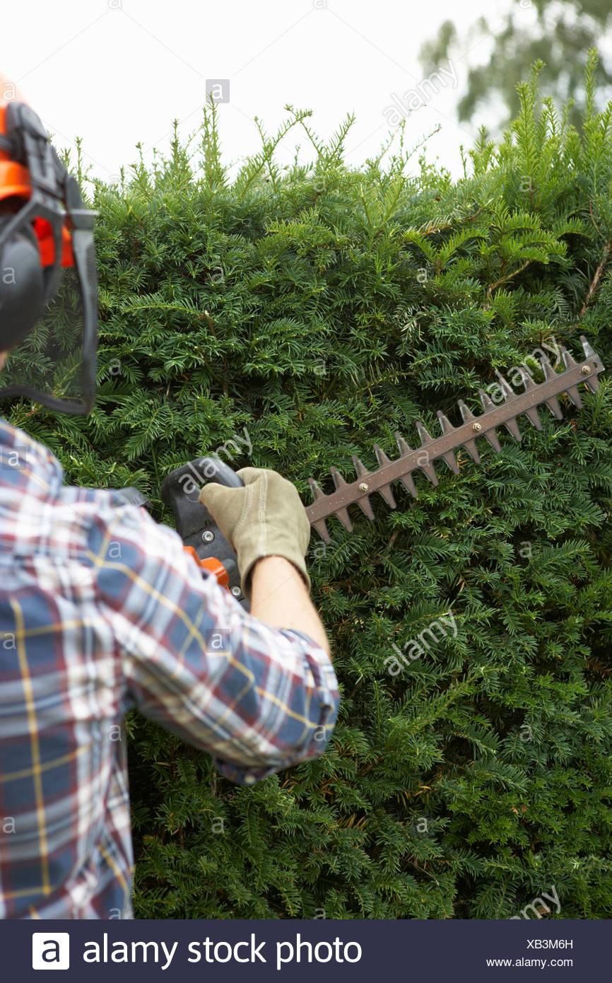 Man trimming hedge - Stock Image
