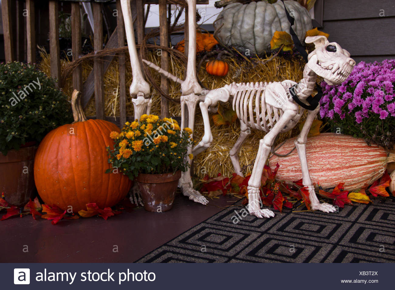Halloween Decorations Include A Hungry Looking Dog Skeleton Stock