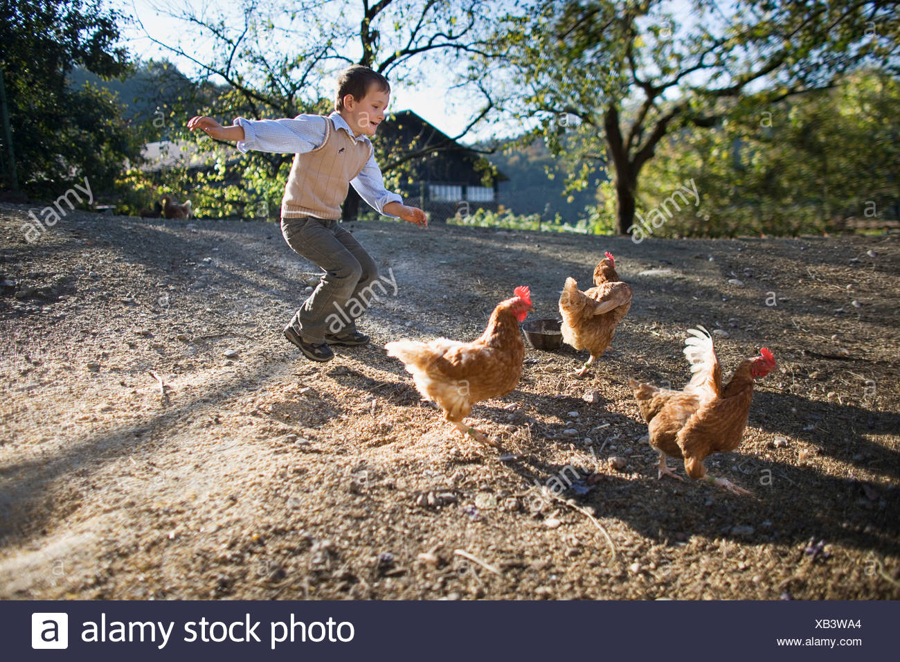 young boy chasing chicken on farm - Stock Image