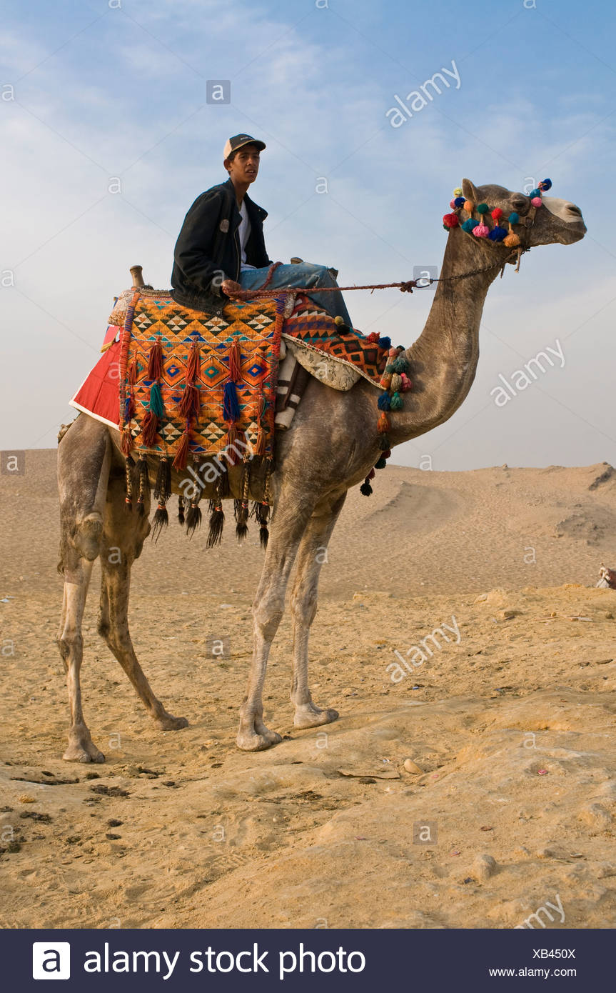 camel saddles ap world history