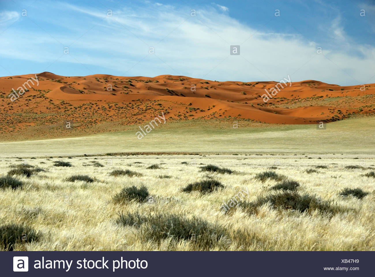 red dunes in the desert, Namibia, D707 - Stock Image