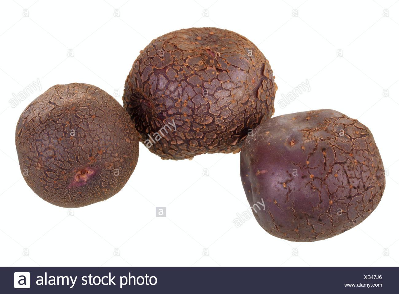 Potatoes, 'Odenwälder Blaue' variety - Stock Image
