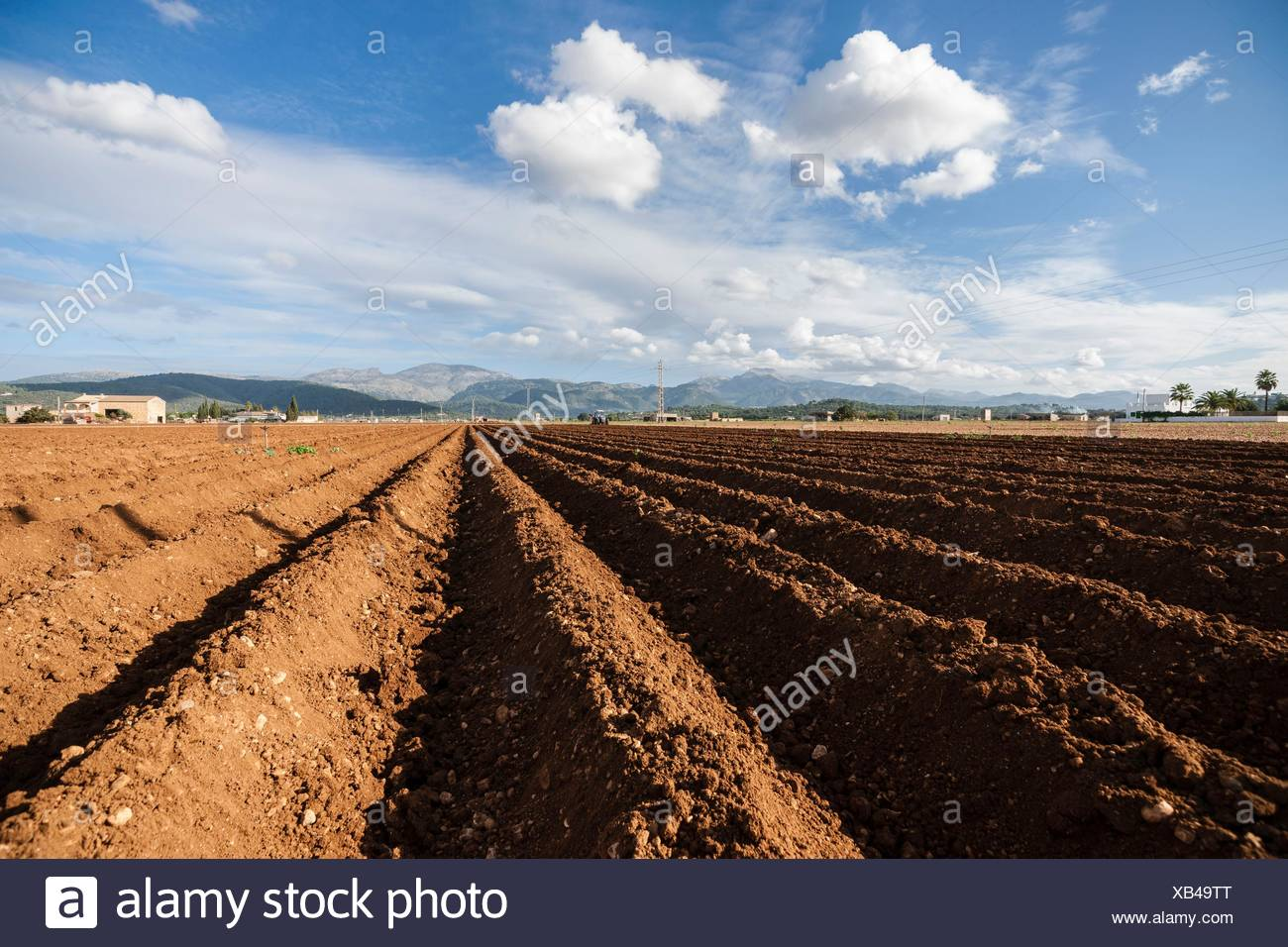 furrows of earth, Sa Pobla, county of Raiguer, Mallorca, Balearic Islands, Spain. - Stock Image