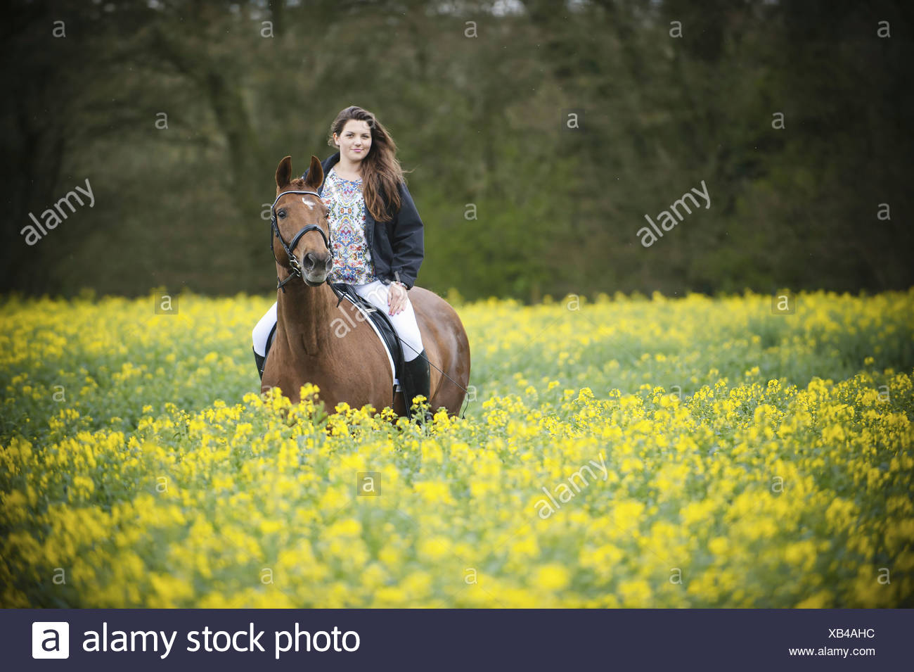 A woman riding on a brown horse through a flowering yellow mustard crop in a field  England - Stock Image